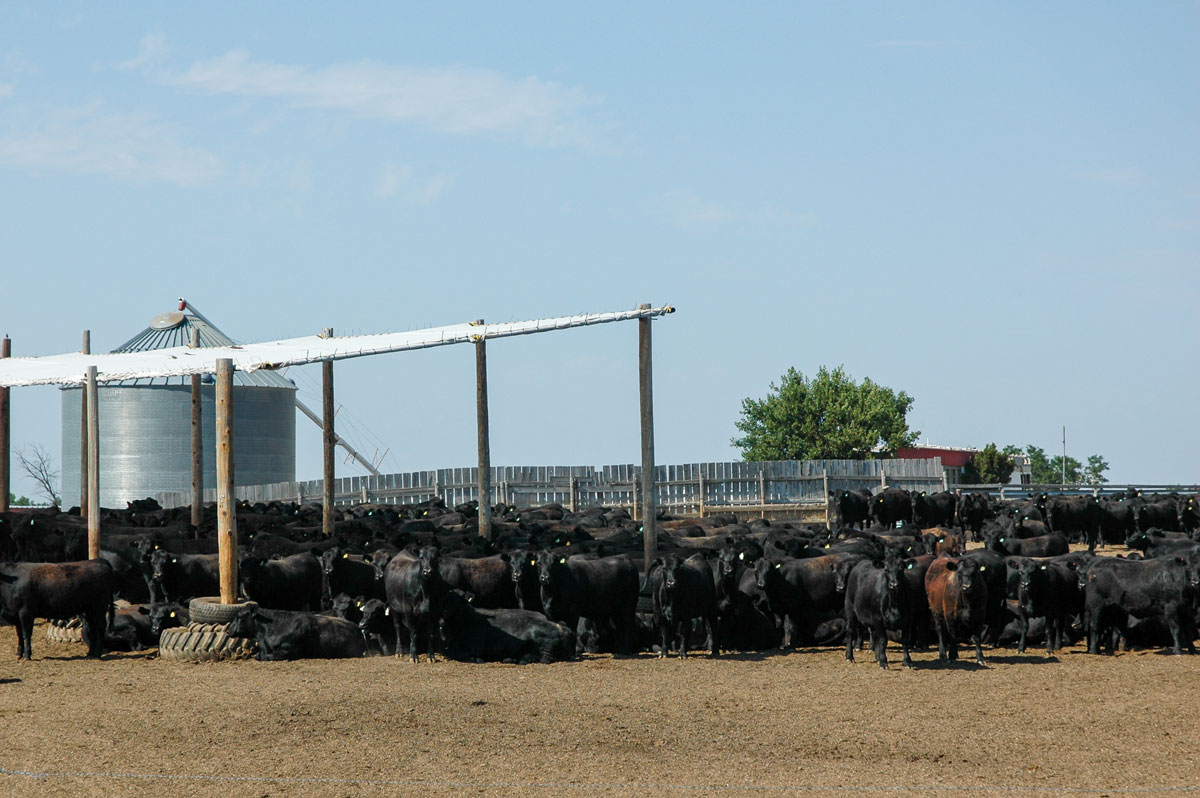 feedyard pen with shade structure
