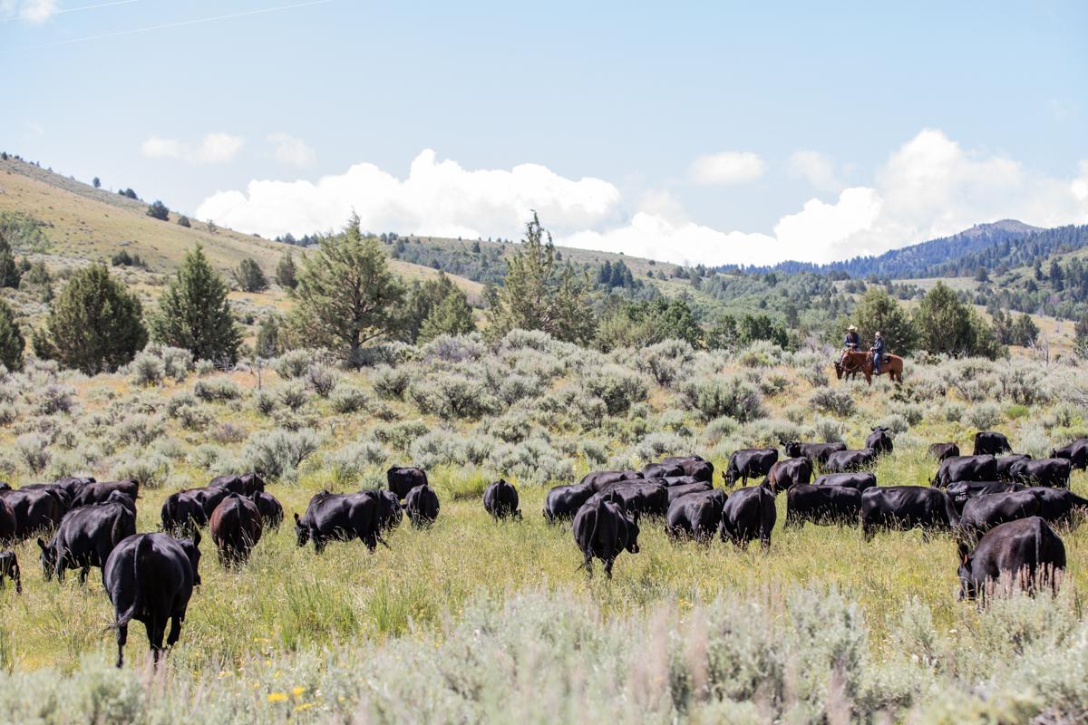 Morgan Ranches scenic