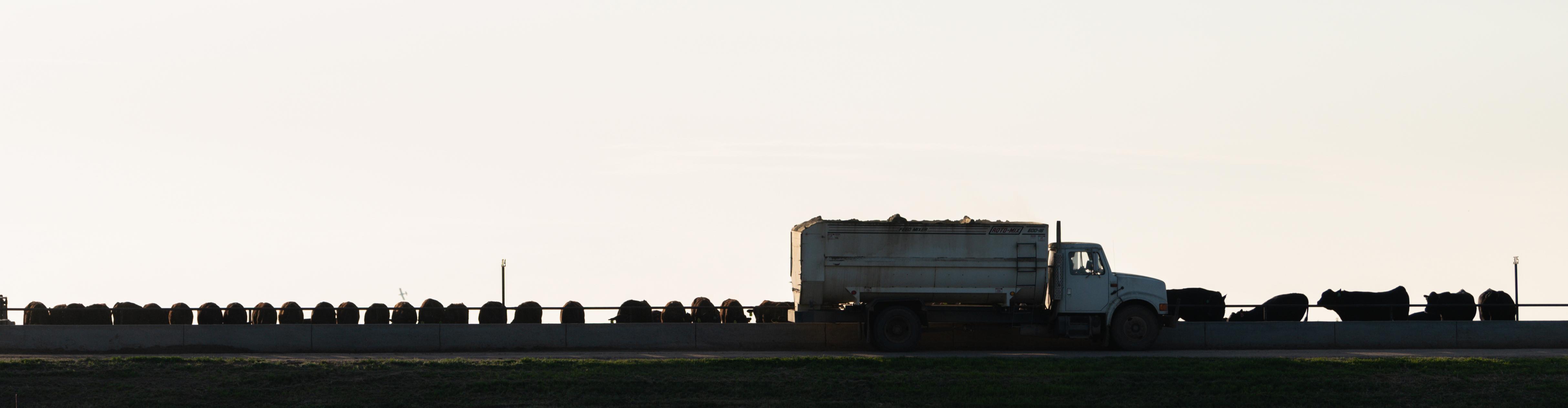 hy plains feedyard