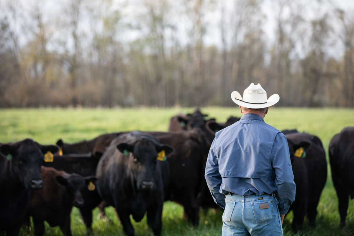 Alabama cowboy checking cows