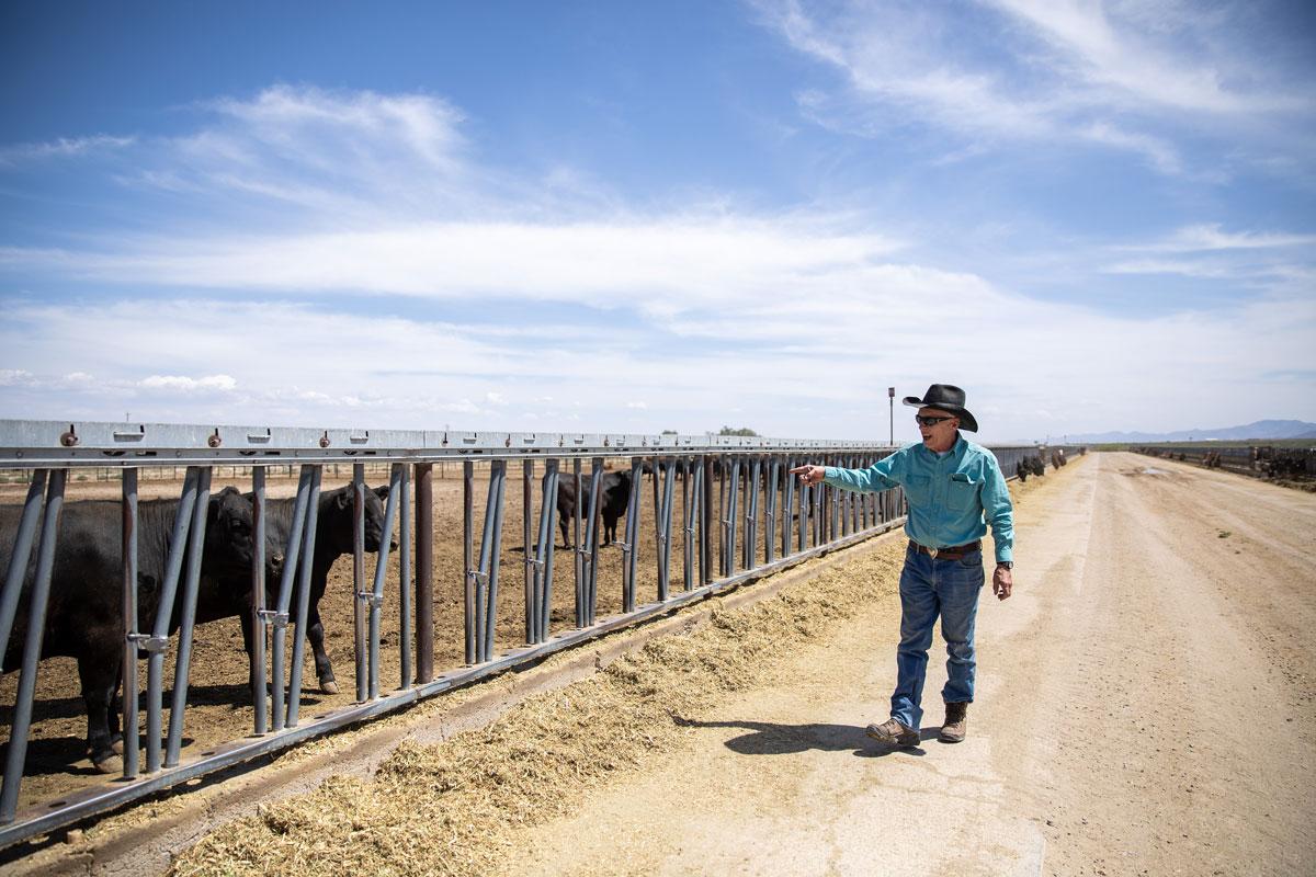 Ross Humphreys checking cattle