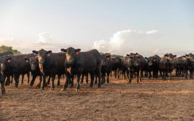Kansas feedyard honored by Certified Angus Beef