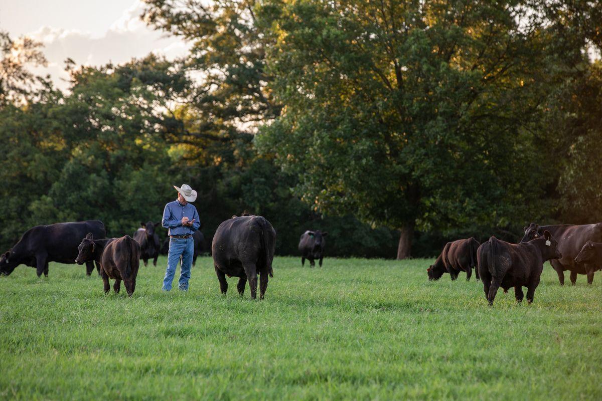 kevin yon checking cows