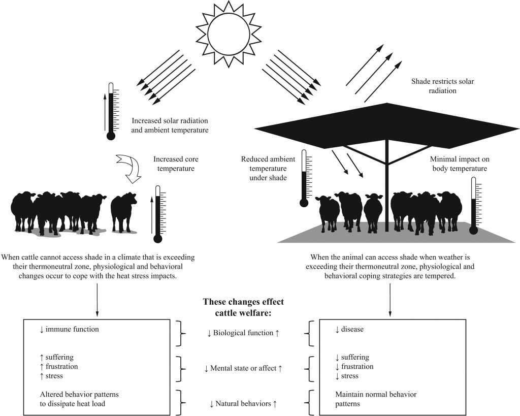 cattle in shade graphic