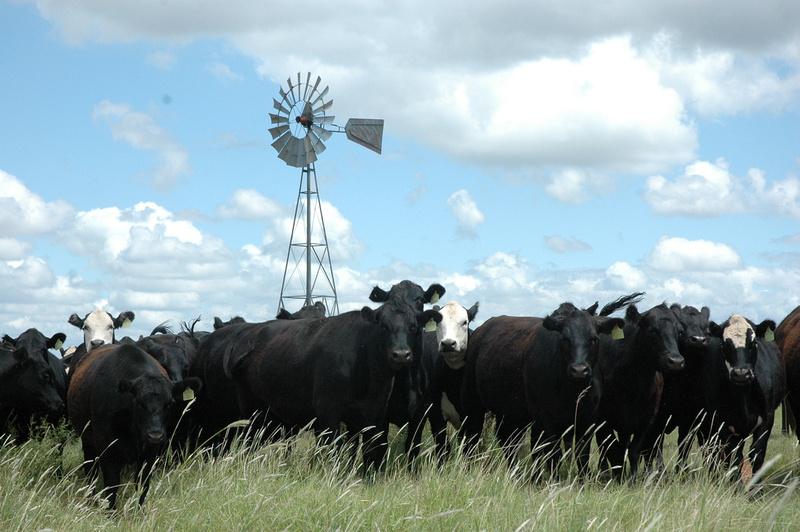 $20,000 in beef scholarships