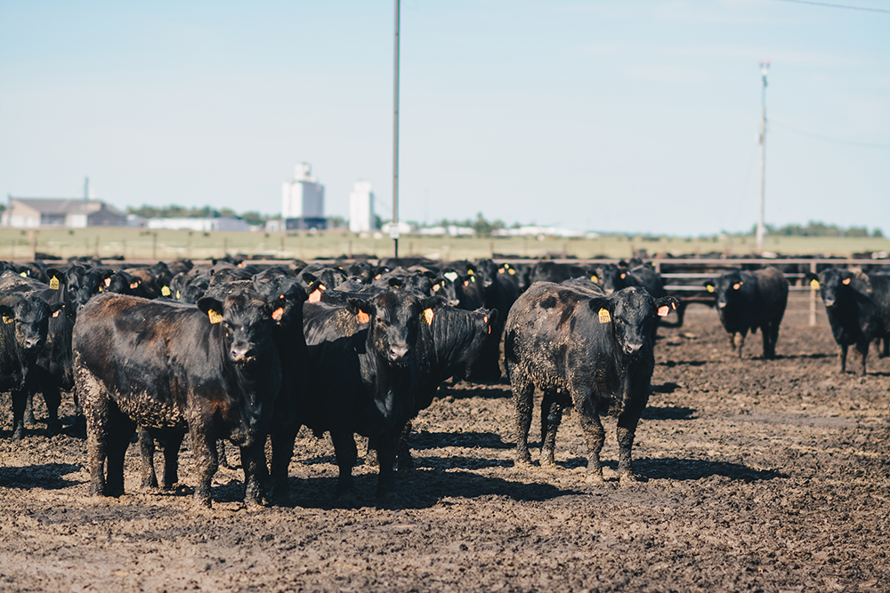 Following the calves: The data is in! The data is in!