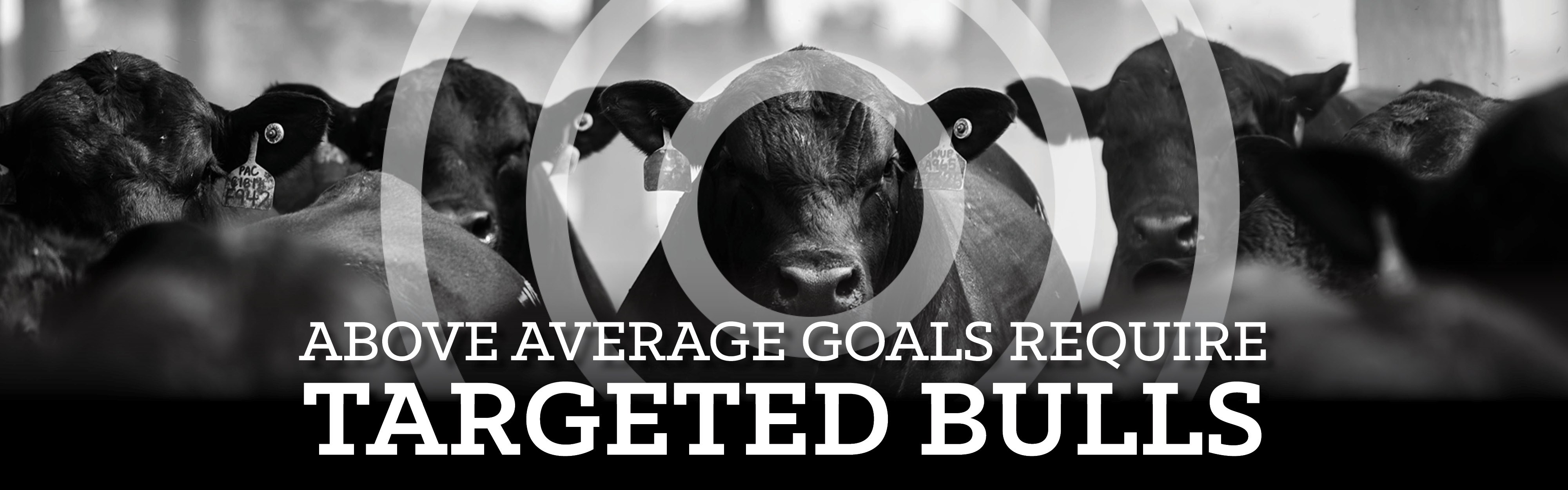 Above average bulls require targeted bulls banner
