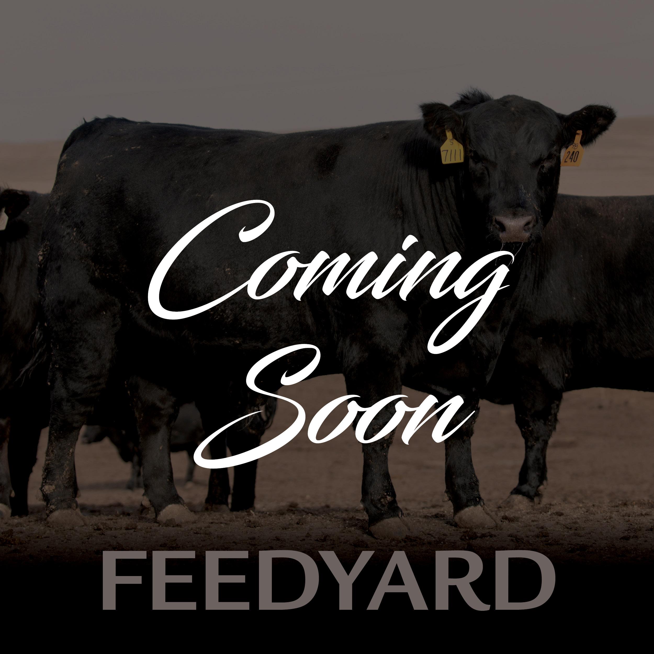 Feedyard Coming Soon