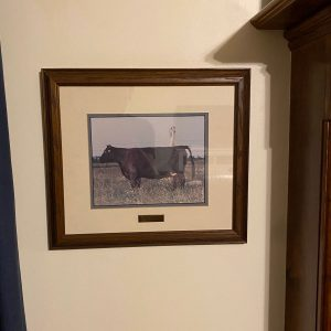 framed photo of angus cow
