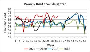 Weekly beef cow harvest 9-1-21
